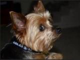 Если вирус гриппа передаваться от собаки к человеку?