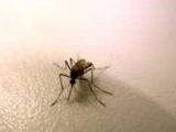 Как защитить себя от укусов комаров?